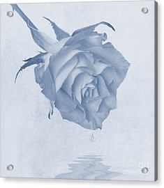 One Drop Of Love... Acrylic Print by John Edwards