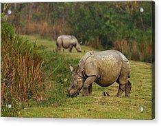 One-horned Rhinoceros Feeding Acrylic Print by Jagdeep Rajput