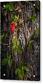 One Red Leaf Acrylic Print by Marvin Spates