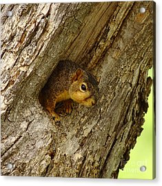 One Too Many Acorns Acrylic Print by Robert Frederick