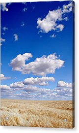 Openness Acrylic Print by Kjirsten Collier