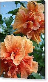 Orange Hibiscus Pair Acrylic Print