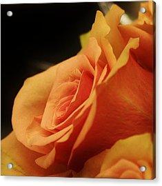 Orange Supreme Acrylic Print by Bruce Bley