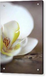 Orchid Acrylic Print by AR Annahita