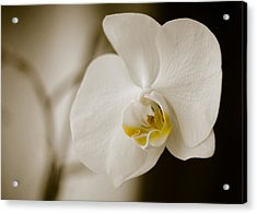 Orchid Acrylic Print by Ivelin Donchev