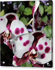 Orchid One Acrylic Print by Mark Steven Burhart