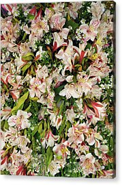 Orchids For Sale In Main Street Market Acrylic Print by Panoramic Images