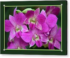 Orchids Acrylic Print by John Freidenberg