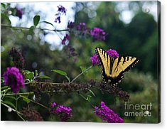 Acrylic Print featuring the photograph Out Of Bounds II by Judy Wolinsky