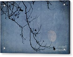 Out On A Limb Acrylic Print by Judy Wolinsky