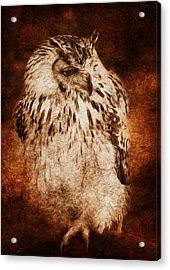 Owl Acrylic Print by Svetlana Sewell