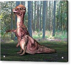 Pachysaurus Dinosaur Acrylic Print