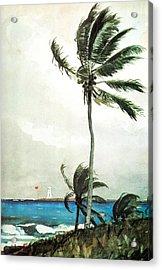 Palm Tree Nassau Acrylic Print