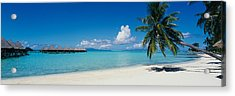 Palm Tree On The Beach, Moana Beach Acrylic Print