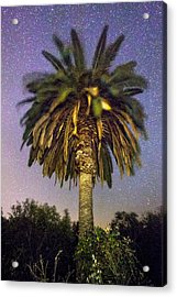 Palmtree In Alentejo Acrylic Print by Andre Goncalves