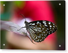 Paper Kite Butterfly  Acrylic Print by Saija  Lehtonen