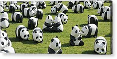 Paper Made Pandas From World Wildlife Acrylic Print by Panoramic Images