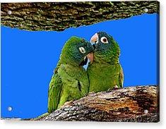 Parakeet Pair Acrylic Print
