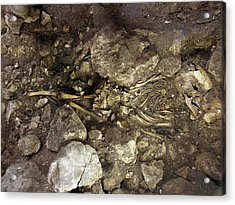 Partially Excavated Human Fossil Acrylic Print by Javier Trueba/msf