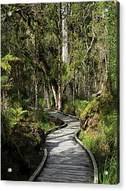 Path Passing Through Forest, Te Acrylic Print by Panoramic Images