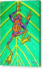 Peace Frog Acrylic Print by Nick Gustafson