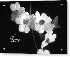 Peace Acrylic Print by Marion Johnson