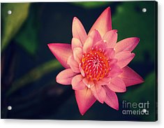 Peace Within Acrylic Print by Vishakha Bhagat