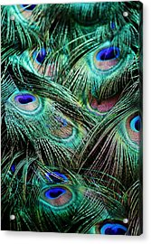 Peacock Feathers Acrylic Print by Paulette Thomas