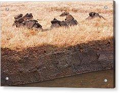 Peat Cutting At Broadford Acrylic Print