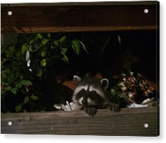 Peek-a-boo Baby Acrylic Print by Jacquelyn Roberts