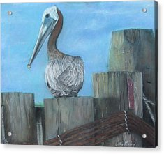 Pelican At Hatteras Ferry Acrylic Print