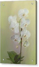 Phalaenopsis Acrylic Print by Carol Erikson