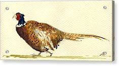 Pheasant Acrylic Print by Juan  Bosco
