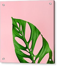Philodendron Leaf On Pink Acrylic Print