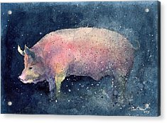 Pig Acrylic Print by Tim Oliver