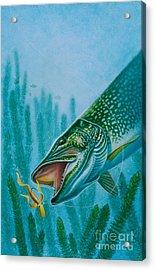 Pike And Jig Acrylic Print by Jon Q Wright