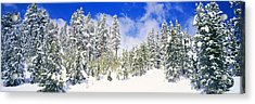 Pine Trees On A Snow Covered Hill Acrylic Print