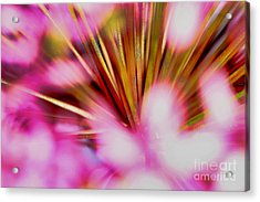 Acrylic Print featuring the photograph Pink Alium by Rebeka Dove