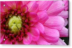 Pink Beauty Acrylic Print by Bruce Bley