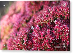 Pink Flower Bouquet Acrylic Print by Jolanta Meskauskiene