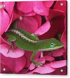 Pink Hydrangea And Lizard 2 Acrylic Print