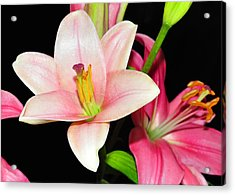 Acrylic Print featuring the photograph Pink Lilies by Lula Adams
