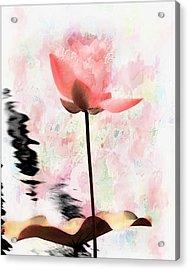 Pink Lotus Acrylic Print by Carol Kinkead