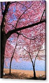 Pink Acrylic Print by Mitch Cat