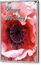 Pink Poppy Acrylic Print