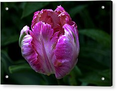 Pinklette Acrylic Print