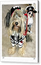 Pirate Dogs Acrylic Print by Jane Schnetlage
