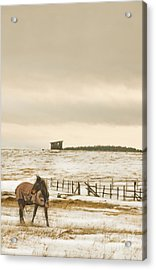 Plaid And Snow Acrylic Print by Sandi Mikuse
