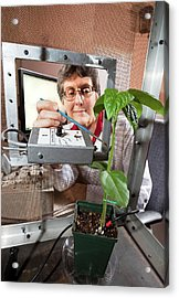 Plant Disease Transmission Research Acrylic Print by Stephen Ausmus/us Department Of Agriculture
