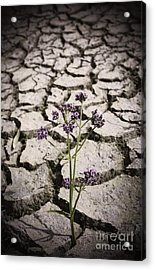Plant Growing Through Dirt Crack During Drought   Acrylic Print by Jorgo Photography - Wall Art Gallery